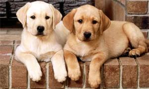 Guarda la versione ingrandita di Vicenza, coppia divorzia: lui costretto a pagare alimenti ai...loro cani