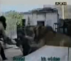 YOUTUBE Leone attacca ragazzo che lo stava accarezzando: lo azzanna e...