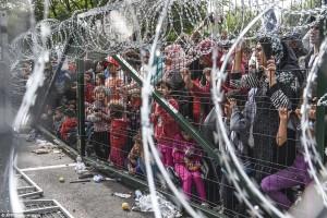 Bastonate, lacrimogeni e cani feroci: così trattano i profughi al confine Ungheria-Serbia
