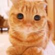 I gatti che su Instragram hanno più follower degli umani 11