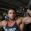 Coccinella arlecchino invade la Gran Bretagna: bodybuilder punto rischia di morire 2
