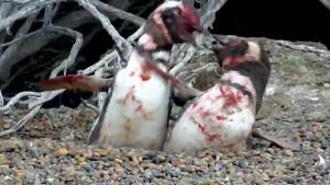 Guarda la versione ingrandita di Il combattimento all'ultimo sangue tra i due pinguini