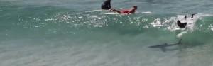 Surfista non si accorge di avere uno squalo sotto la tavola