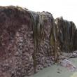 YOUTUBE Terremoto Nuova Zelanda, fondale marino si solleva di due metri
