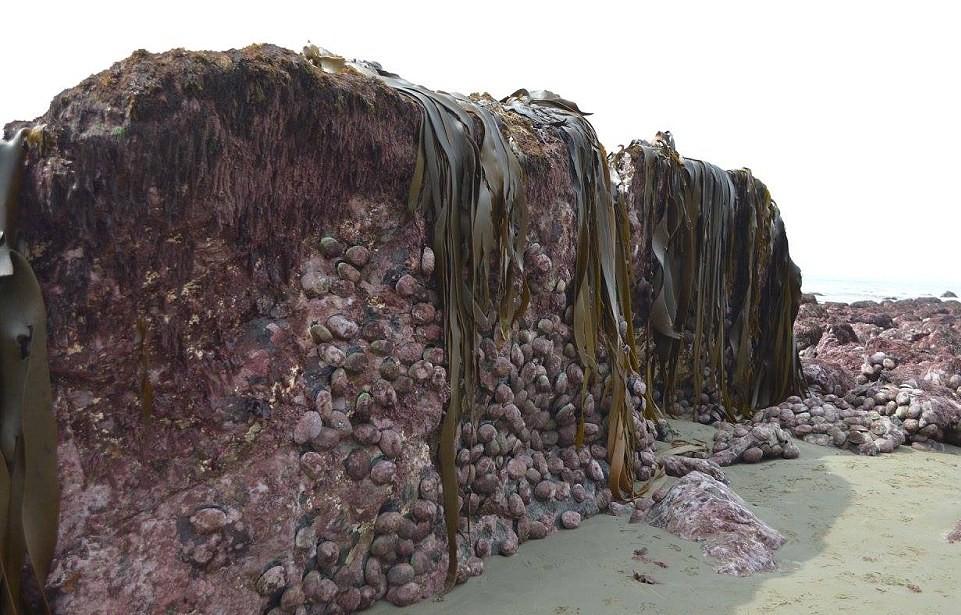 Risultati immagini per terremoto, nuova zelanda, fondo oceano