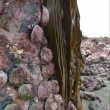 YOUTUBE Terremoto Nuova Zelanda, fondale marino si solleva di due metri 2