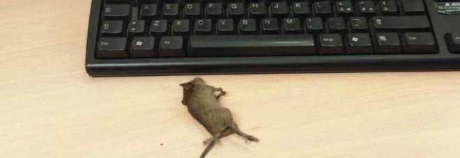 Roma, topo morto sulla scrivania dell'ufficio anagrafe2