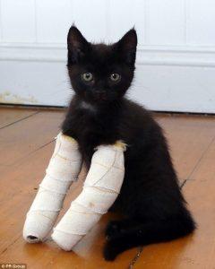 Gattini nati con le zampe deformi: raccolta fondi per aiutarli6