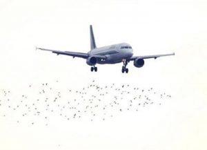 India: aereo scarica feci in volo? Multa di almeno 700 euro