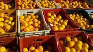 Genova, arance al pesticida in 40 scuole elementari