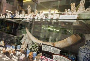 "Cina, ""decisione storica"": stop a commercio avorio entro 2017"