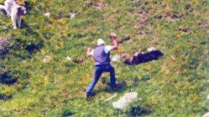 Cane ucciso a bastonate da due pastori, chiesta condanna a due anni