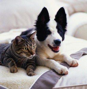 Cimitero per cani e gatti: a Vignola potrebbe diventare realtà