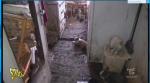 Mestre, vive con 200 conigli in casa: vigili lo obbligano a sgomberarli...