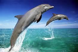 Delfini ''tursiope''