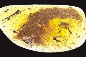 Un fossile di dinosauro nella resina: il vero Jurassic Park arriva dalla Birmania