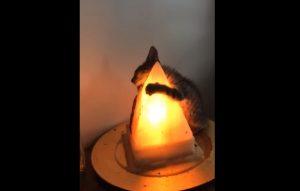 YOUTUBE Il gattino ha freddo: ecco come decide di scaldarsi