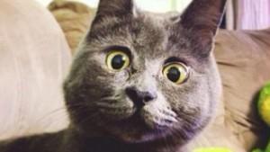"""SocialCom: """"Chi paga le notizie?"""". Nessuno, e i siti campano con... i gattini"""