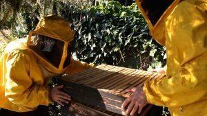 """""""Il tempo delle api"""": la docufiction in crowdfunding sull'apicoltura naturale"""