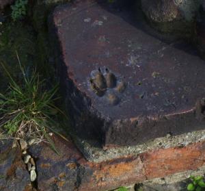 A Torino c'è un'impronta di cane di duemila anni fa FOTO