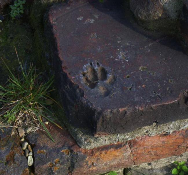 A Torino c'è un'impronta di cane di duemila anni fa FOTO2