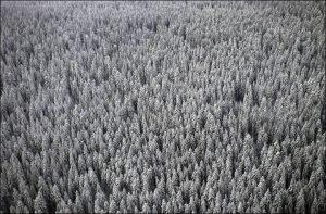 """Game2:Winter, il reality estremo in Siberia: """"Non ci sono regole"""""""