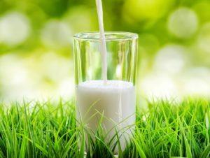 Latte vegetale (soia, riso...): cosa ha in più e in meno di quello di mucca