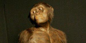 Lucy forse era poligama: nuove impronte riscrivono storia nostri antenati