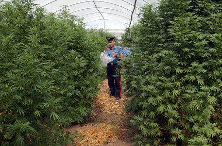 Santa Marinella, in casa 35 piante di marijuana: arrestato il principe Odescalchi