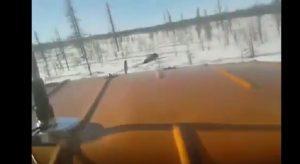YOUTUBE Siberia: schiacciano orso col fuoristrada e si filmano con lo smartphone
