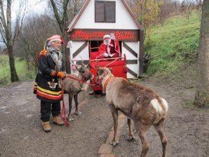 M5S contro le renne alle feste di Natale. La crociata del deputato Bernini