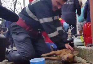 VIDEO YOUTUBE Vigile del fuoco rianima cane con massaggio cardiaco