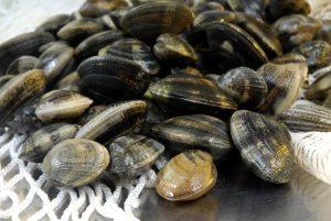 Vongole veraci contaminate: allerta in tutta Italia per Escherichia Coli