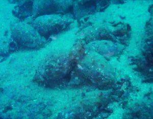 Taranto, ritrovato in mare relitto nave greca con statua