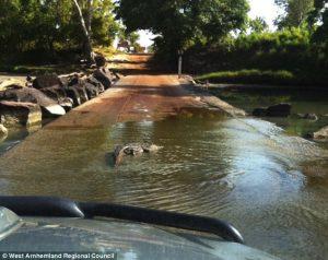 Australia, attraversa a piedi fiume in piena: coccodrillo lo assale