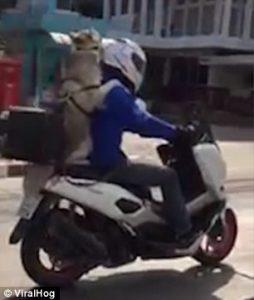 Cane in moto con gli occhialini contro il vento5