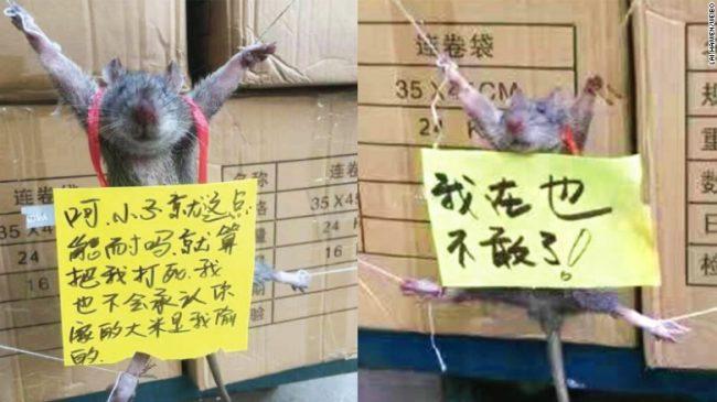 Cina, topo rubava nel negozio: proprietario lo tortura 2