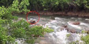 Coccodrillo lungo 4 metri mimetizzato nelle acque del fiume4