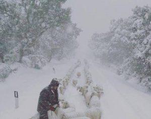 Maltempo, scuole chiuse a Nuoro lunedì 23 gennaio