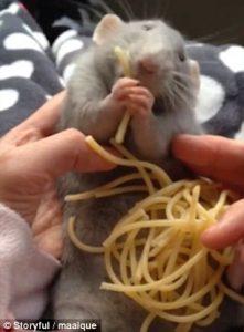 Topolino mangia gli spaghetti 5