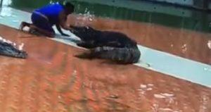 YOUTUBE Thailandia: coccodrillo azzanna addestratore al braccio e...