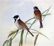 Uccelli spariti