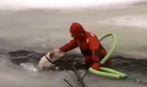 YOUTUBE Cane intrappolato nel lago ghiacciato: come lo salvano