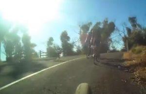 Canguro salta sulla testa del ciclista