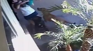 YOUTUBE Mamma fa scudo salvando il figlio di due anni dall'attacco dei cani