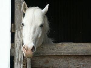 """Don Andrea Contin, l'amante: """"In una stalla di Pavia col un cavallo ho detto basta"""""""