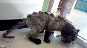 Gatto col pelo tagliato stile dinosauro: nuova moda? 3
