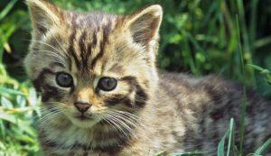 Killer di gatti a Rovigo: 3 mici avvelenati con l'antigelo
