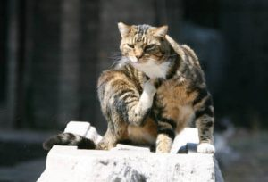 Gatto ritorna a casa dopo 2 anni. E 140 chilometri