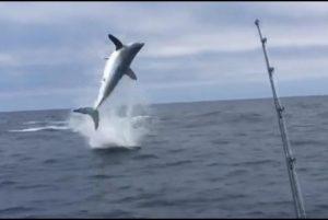 YOUTUBE Squalo acrobatico: salta e ruba l'esca ai pescatori